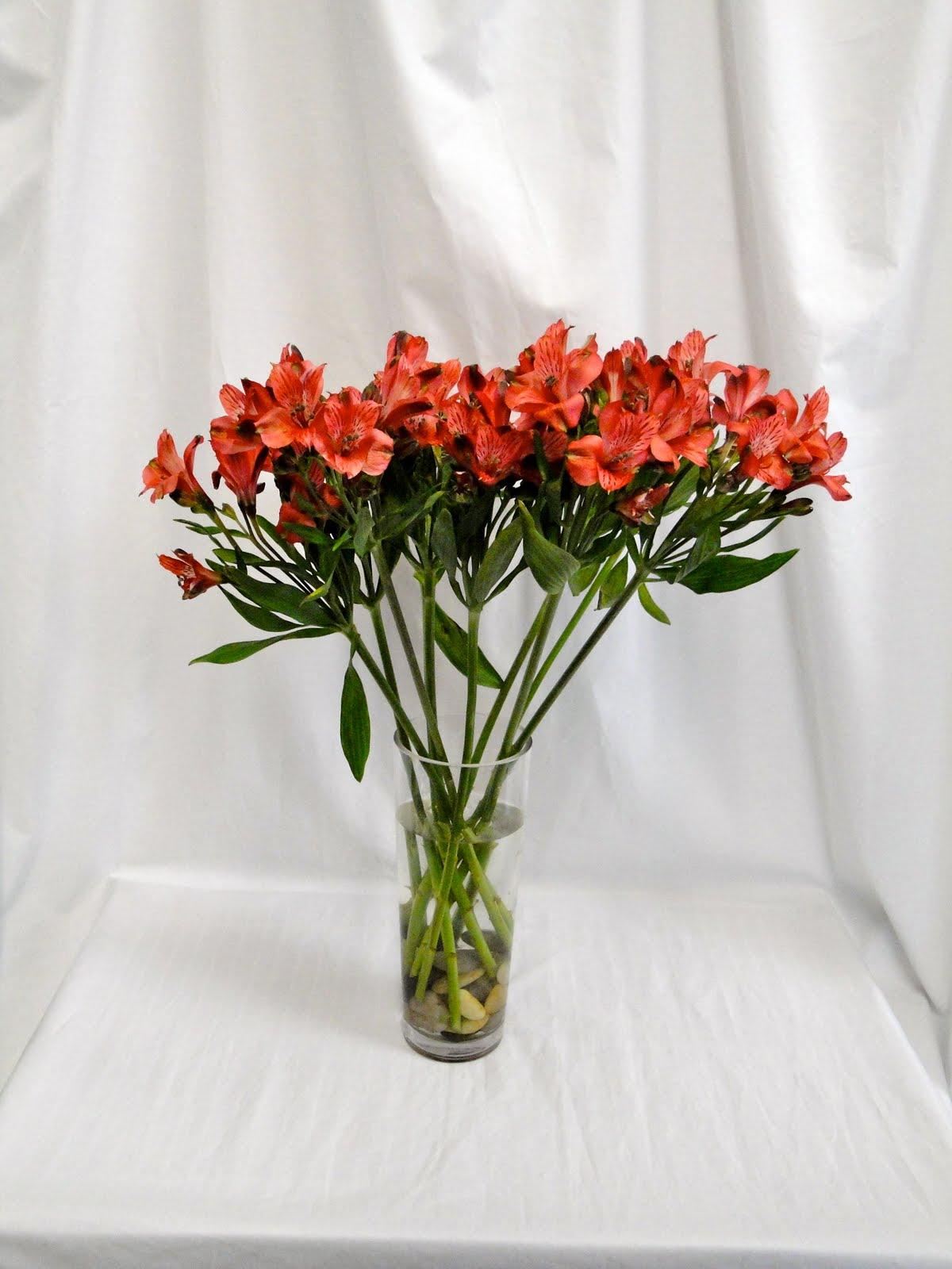 Bell Flowers Alstroemeria Test Day Eight Bell Flowers Blog