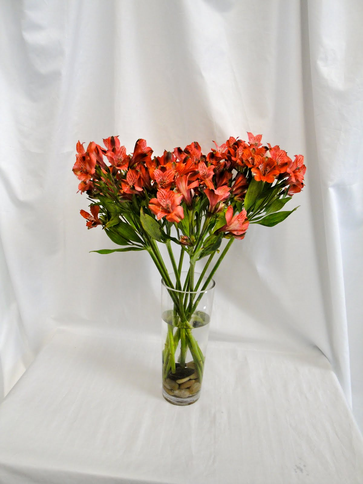 Bell Flowers Alstroemeria Test Day Twelve Bell Flowers Blog