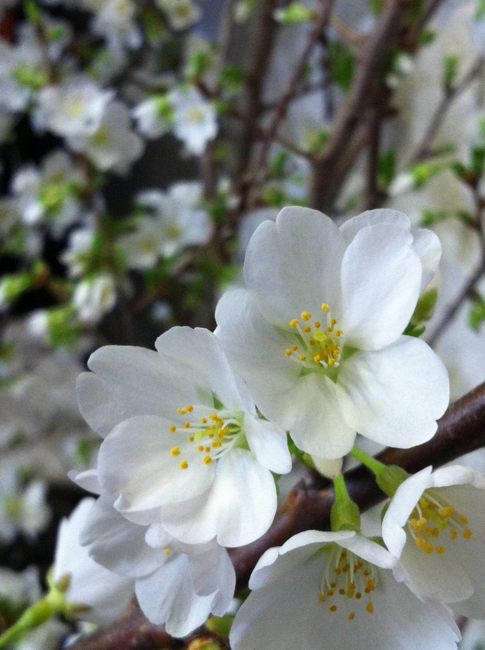 Img4253 Bell Flowers Blog