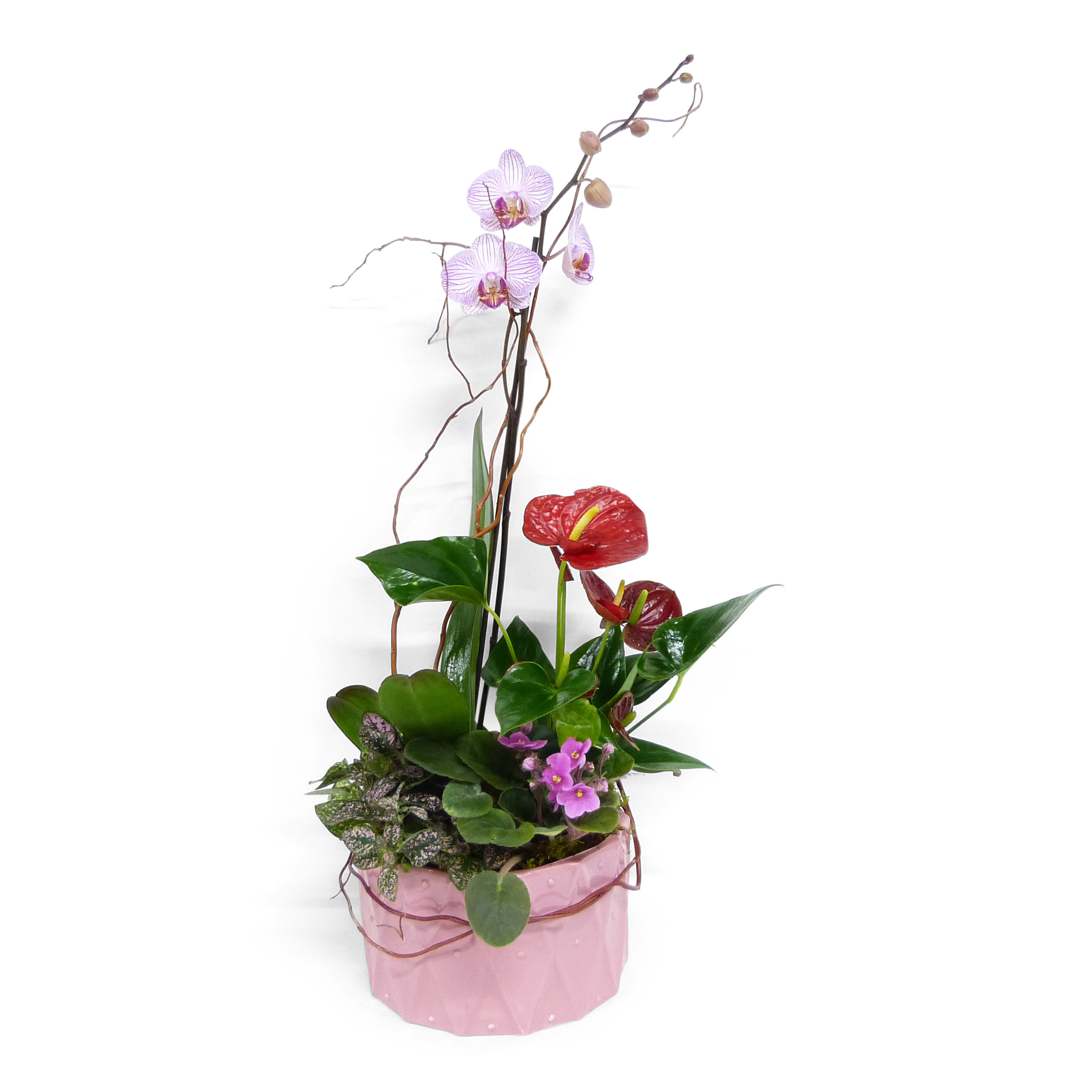 Bf 458 Blooming Planter Bell Flowers Blog